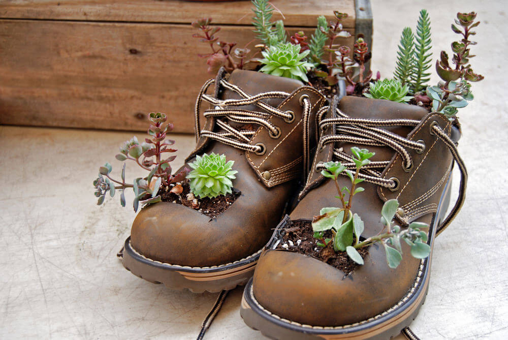 Growing succulents are bursting out from this nice snug-looking pair of leather boots with square cut-out holes up front.
