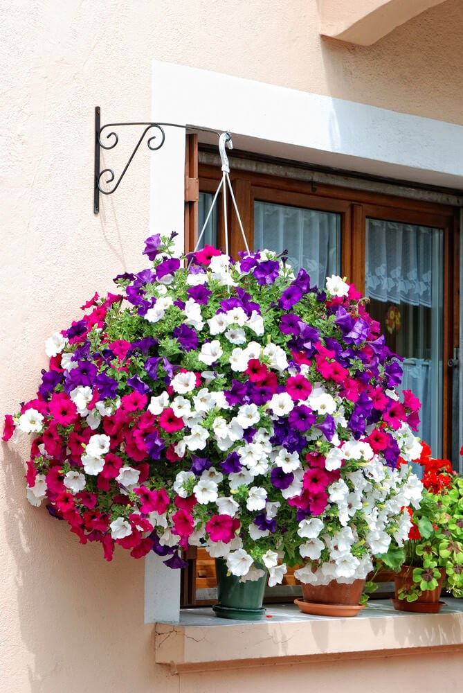 Massive hanging flower basket exploding with purple pink and white flowers.