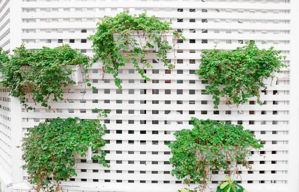 Another example of a vertical garden, this time plants on a white lattice privacy wall.