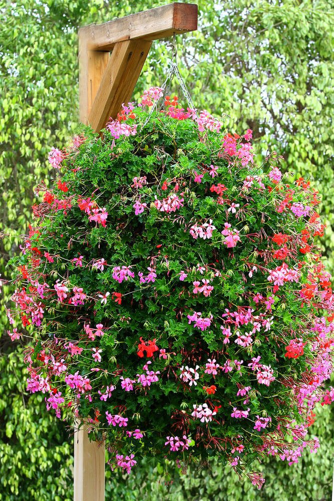 Picture of an enormous hanging flower basket.
