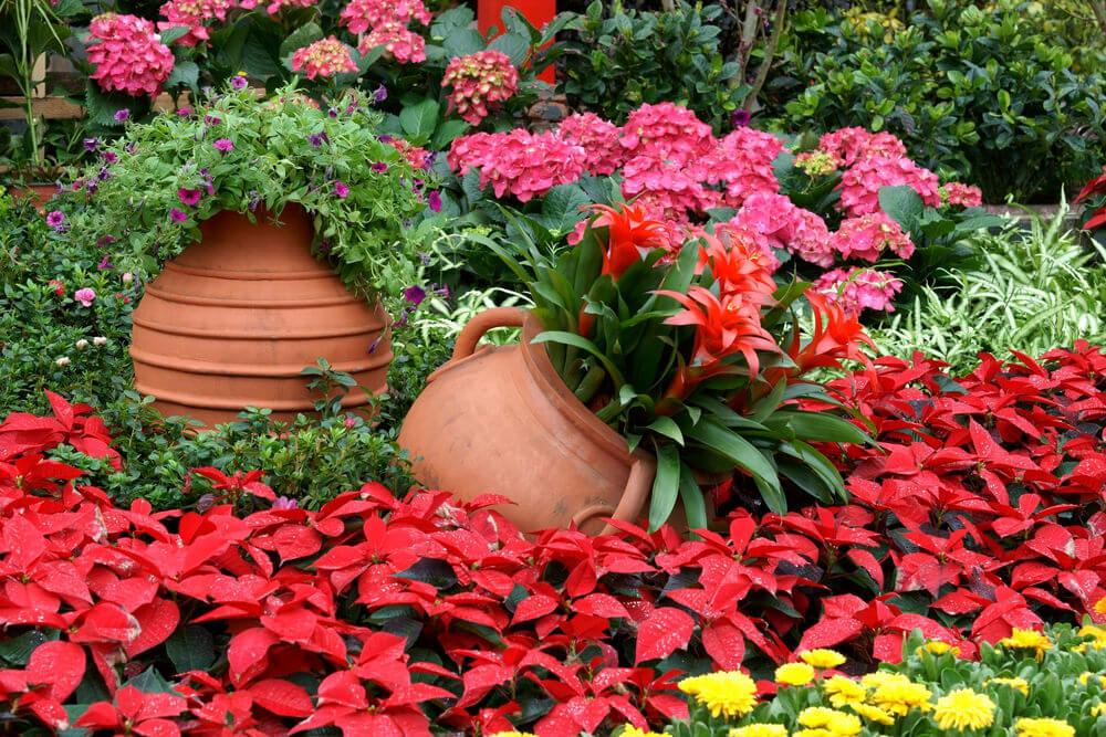 25 Hydrangea Flower Pot And Planter Arrangements Photos Home Stratosphere
