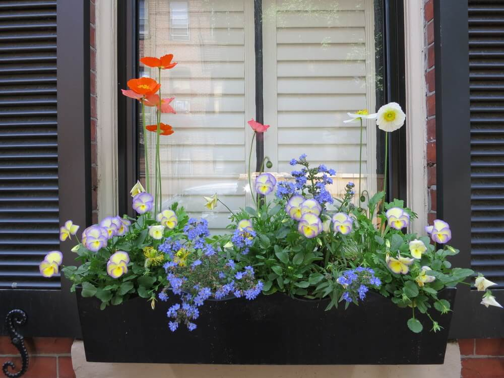 Charcoal grey wooden flower box with violet yellow and purple flowers.