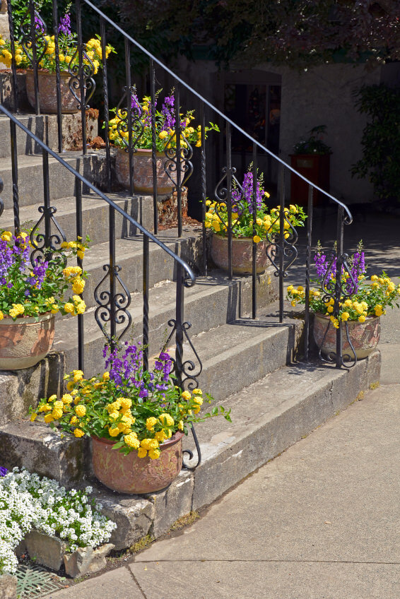Clay pots sit on both sides of the staircase, opposite the metal railings, and are highlighted with their yellow and purple blossoms.