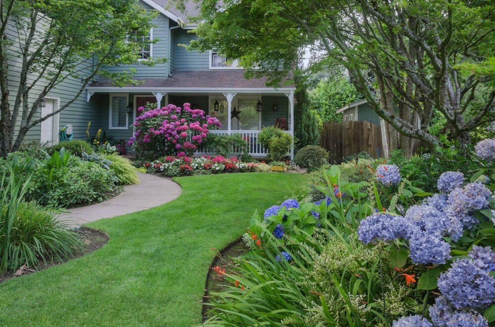 Violet hydrangeas in a front yard with other flowers and grasses as well as a separate pink hydrangea bush in front of the front porch of the house forming the backdrop of another garden with other smaller flowers.