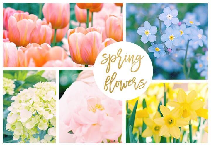 1sping-garden-flowers