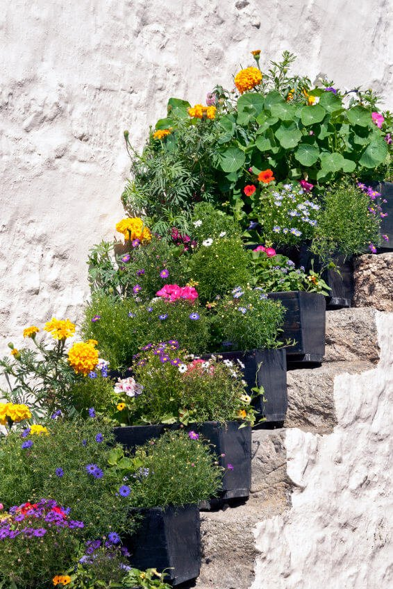 These steps appear to be flooded with bushes and blossoms. The pots or containers are made from wood, painted in black and tacked to each step.