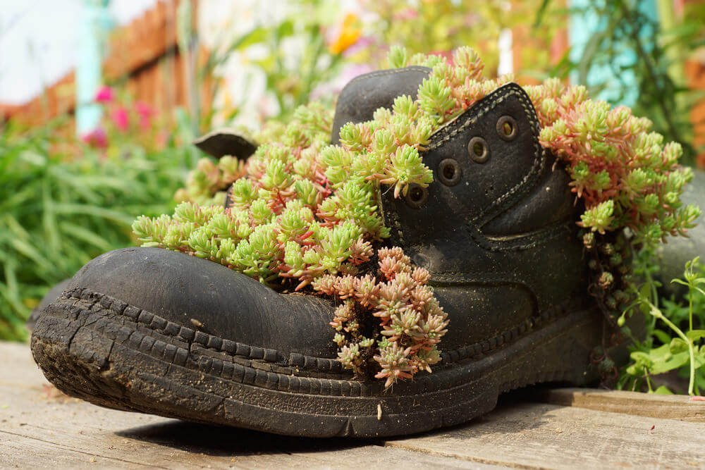 This solitary rugged black boot is used as a planter and has its vining plants bursting out all over it.