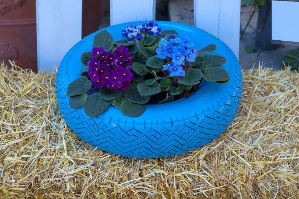 Striking blue tire planter on a bed of hay.