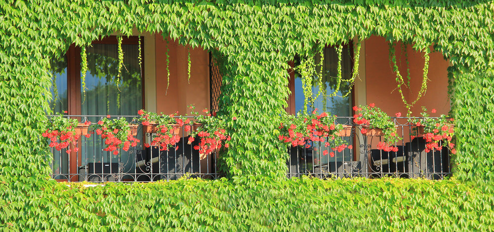 Balcony surrounded by vegetation with bright red flower boxes juxtaposed against the greenery.