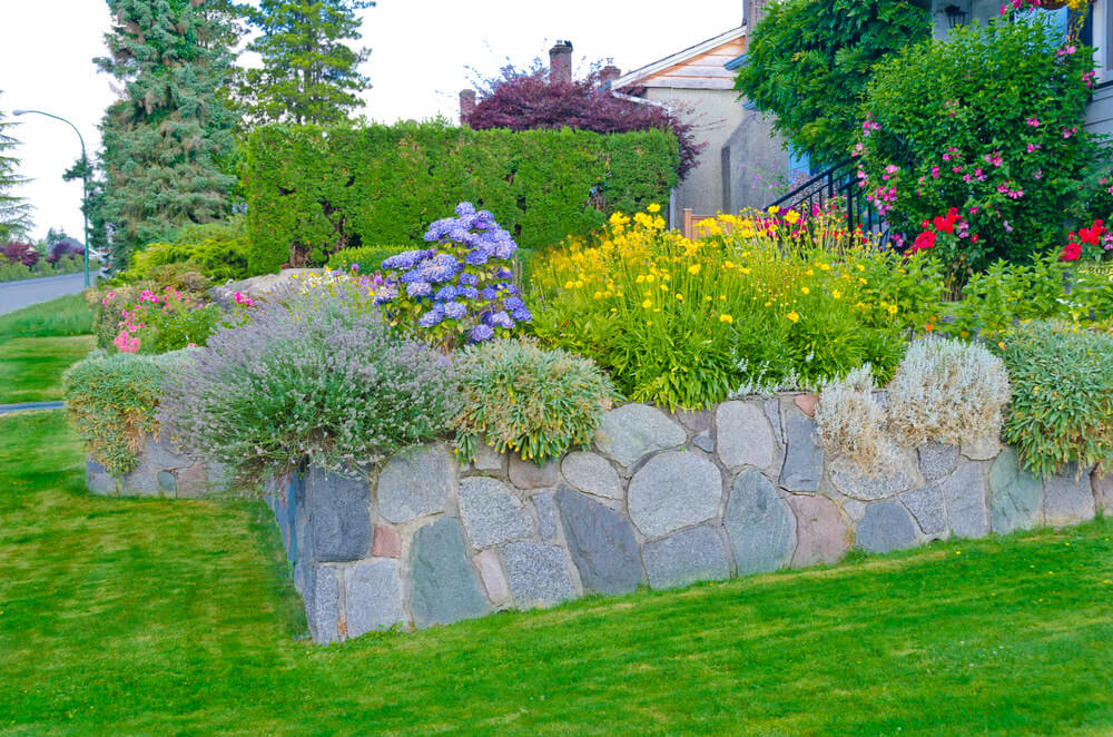 A rubble stone flower box lifts the shrubs on an elevation where mopheads flowers, other blossoms, and greenery stand noticeable.