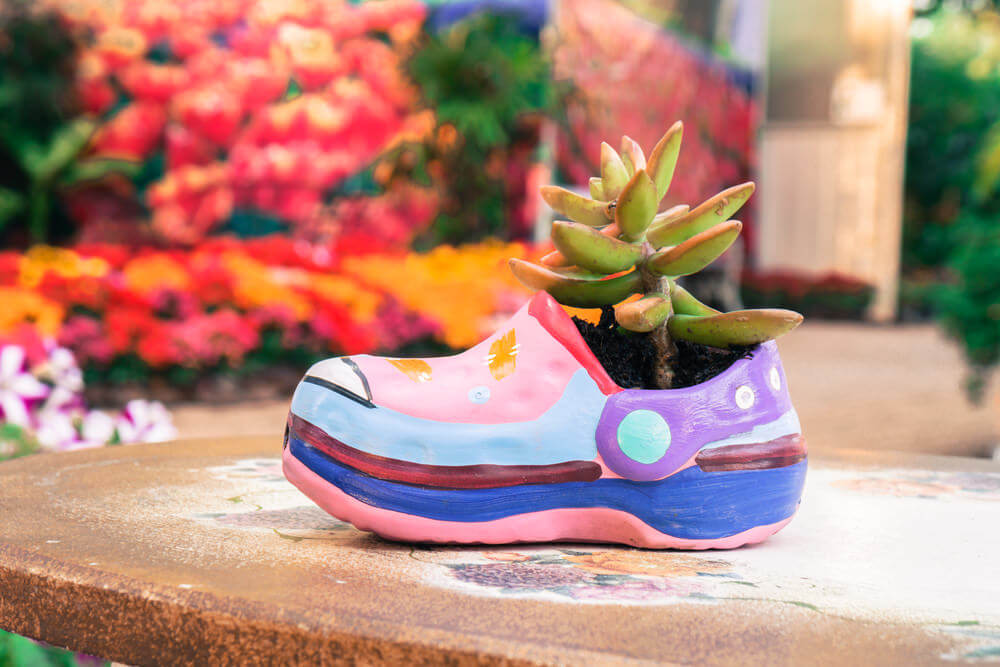 This child's shoe painted with brilliant pastel colors used as planter to a singular plant takes center stage as it sits comfortably alone in its solitude.