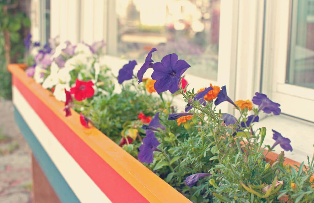 Multi coloured flower box with a variety of flowers under the window.