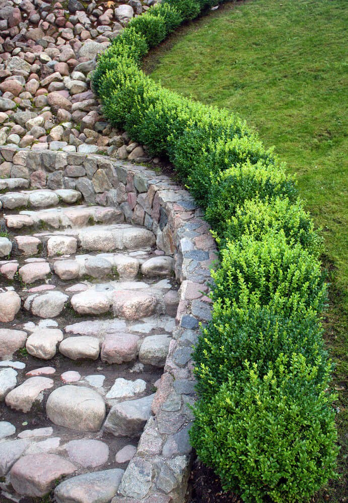 Boxwood hedges are seen snaking through a largely pebbled garden pathway leading to the garden's pebbled steps.