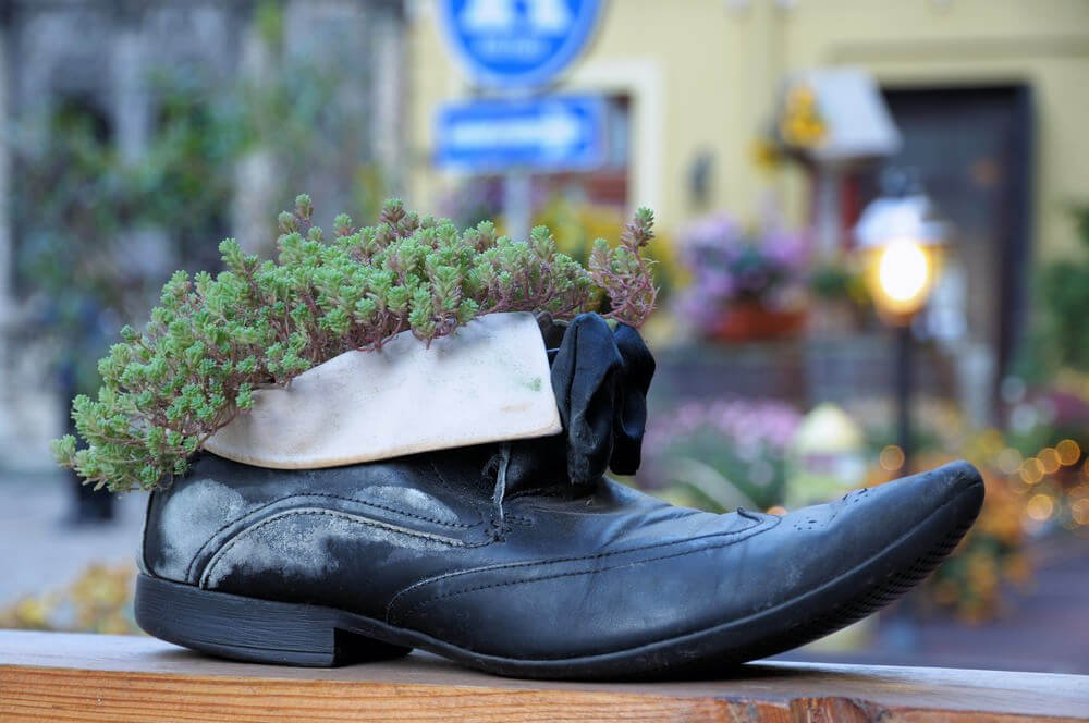 An elegant black shoe sits atop a wooden frame overlooking the window and is planted with a well-chosen herb that blends right in with the shoe's shapely elegance.
