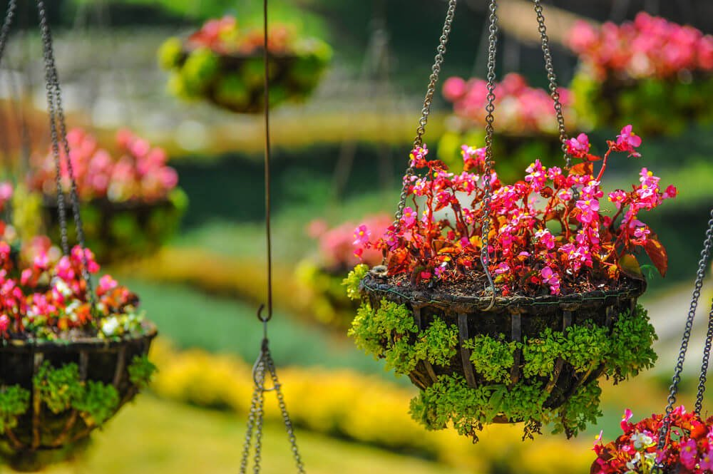 27hanging-basket-flowers