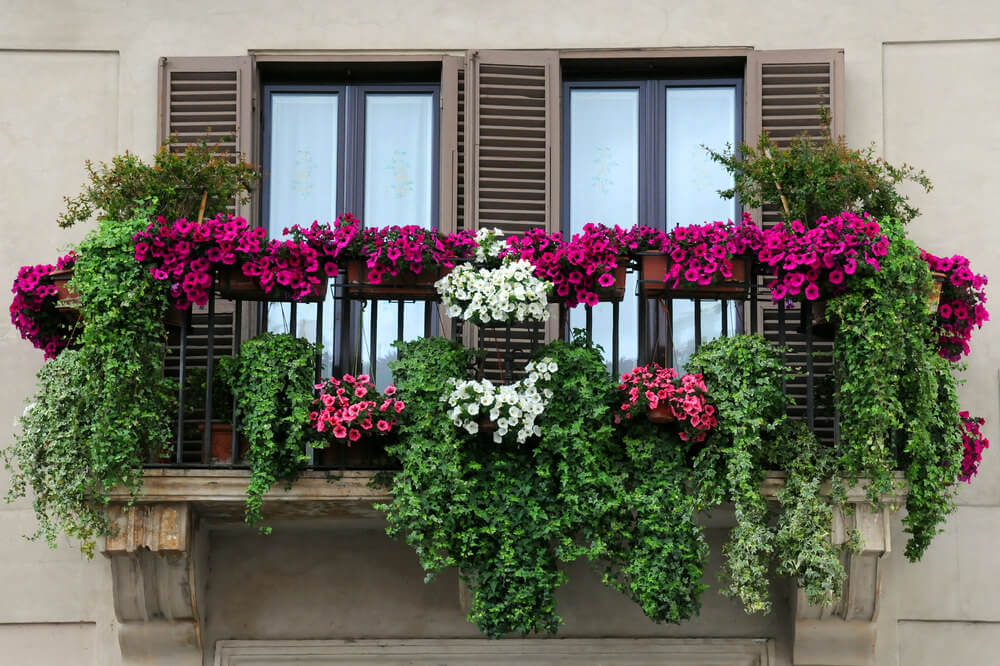 Magnificent balcony filled with many flower boxes containing pink white and fuchsia coloured flowers.
