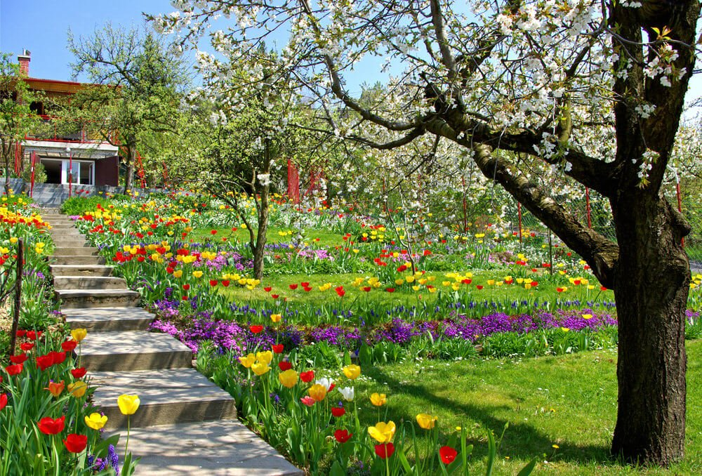 This spring garden comes alive with the flowering tree setting the stage for a wild display of yellow and red tulips, purple flowers, and evergreens. It seems celebratory just to walk the concrete steps of the garden in the middle of this vast parade of beauty.