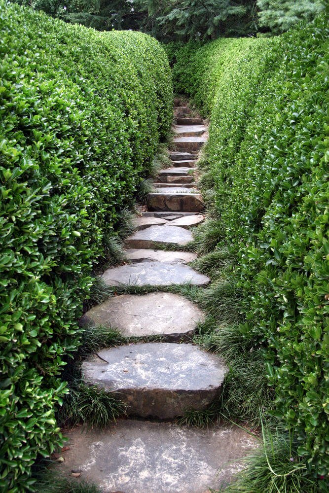 The looming boxwood hedges keep a narrow path on this one-stoned garden step creating an atmosphere of both intimacy and privacy.
