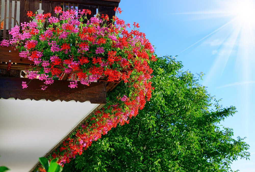 Example of a balcony with flower boxes placed at the base and so the effect is a ram of flowers around the edge of the upper portion of the building.