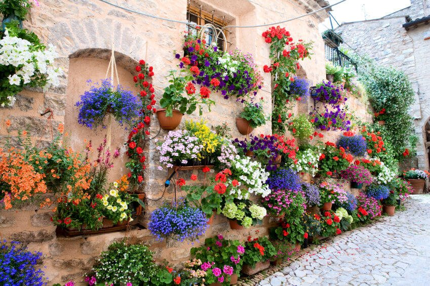 Here is a spectacular display of several hanging flower baskets and flower planners.
