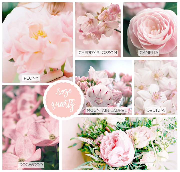 Photo collage of rose quarts (pink) Spring flowers including Peony, Cherry Blossom, Camelia, Mountain Laurel, Deutzia and Dogwood.