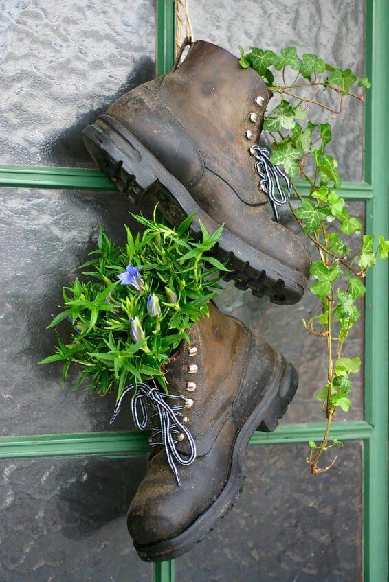 A pair of old mountain boots, still with the shoe laces tied halfway through, is seen dangling by the entrance of the house as they are secured by the handy loop at their back. One boot holds vining plants that conveniently glides down while the other holds a bunch of purple flowers as if it's a regular vase.