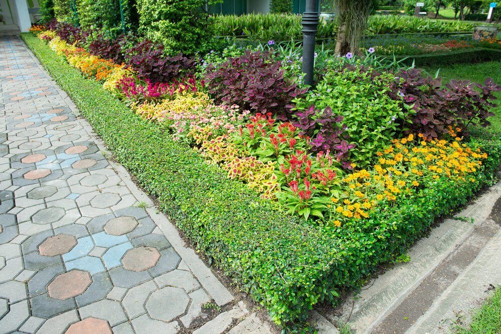 Colored and designed stone bricks are cornered with greenery and colorful plants like mayana and marigolds.