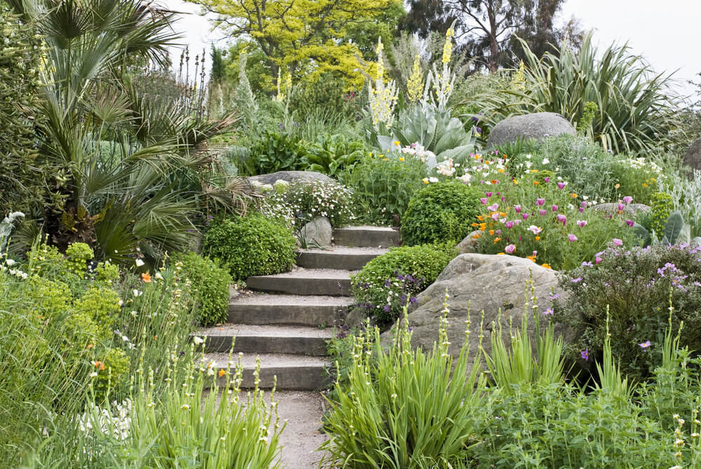 A mixture of evergreens, shrubs, perennial flowers, and indoor palm trees and huge dark-colored boulders make way for the concrete garden steps in their midst. The steps appear to lead nowhere as the invasion of the green shrubs seems to have sealed the direction.