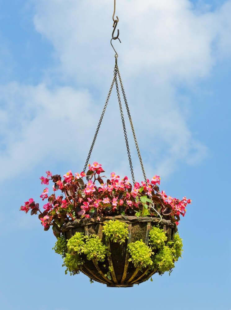 31hanging-basket-flowers