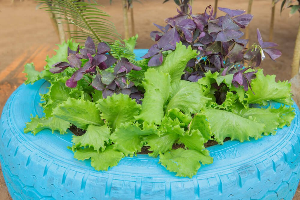 Very appetizing tire planter garden.