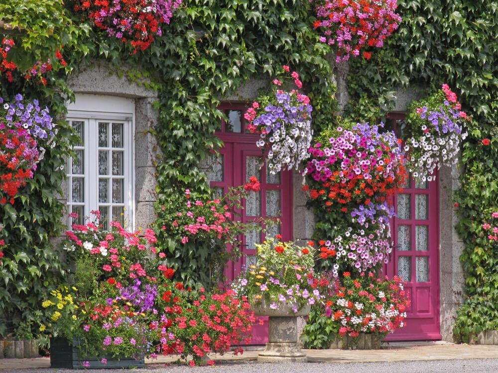 Home front door with ivy and loads of flowers. Stunning.