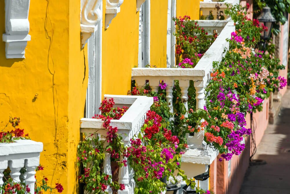 A row of balconies and you're up all overflowing with bougainvillea flowers.