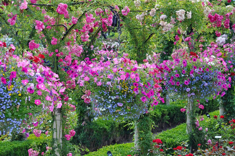 A large garden with a series of incredible hanging flowers from trees in the midst of a large garden.