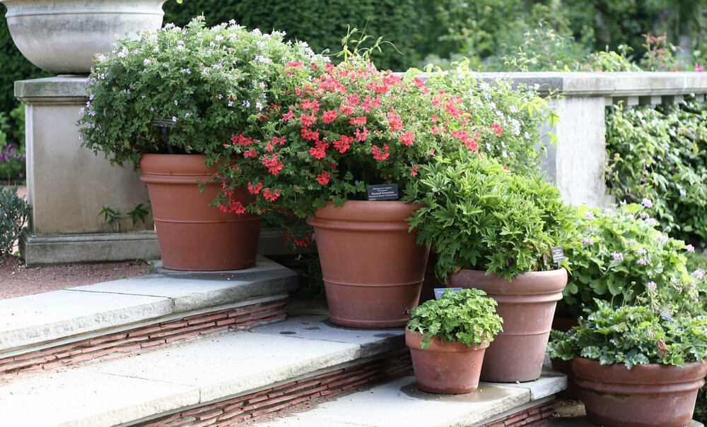 Carrying these pots could be a tough job because they are heavier and heftier compared to smaller pots. These are made from clay or concrete, however, the look with green plants inside them make the steps more robust and appealing.