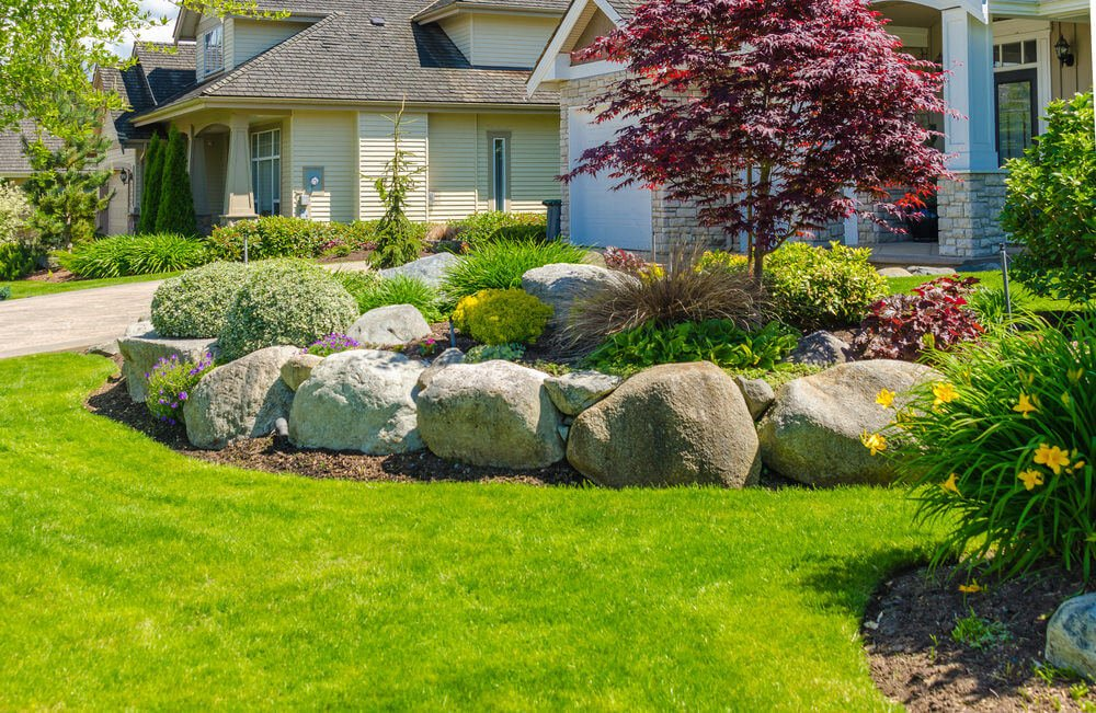 This fascinating front yard is furnished with up-sized rocks and green grass landscape. The center piece is a purple maple tree.