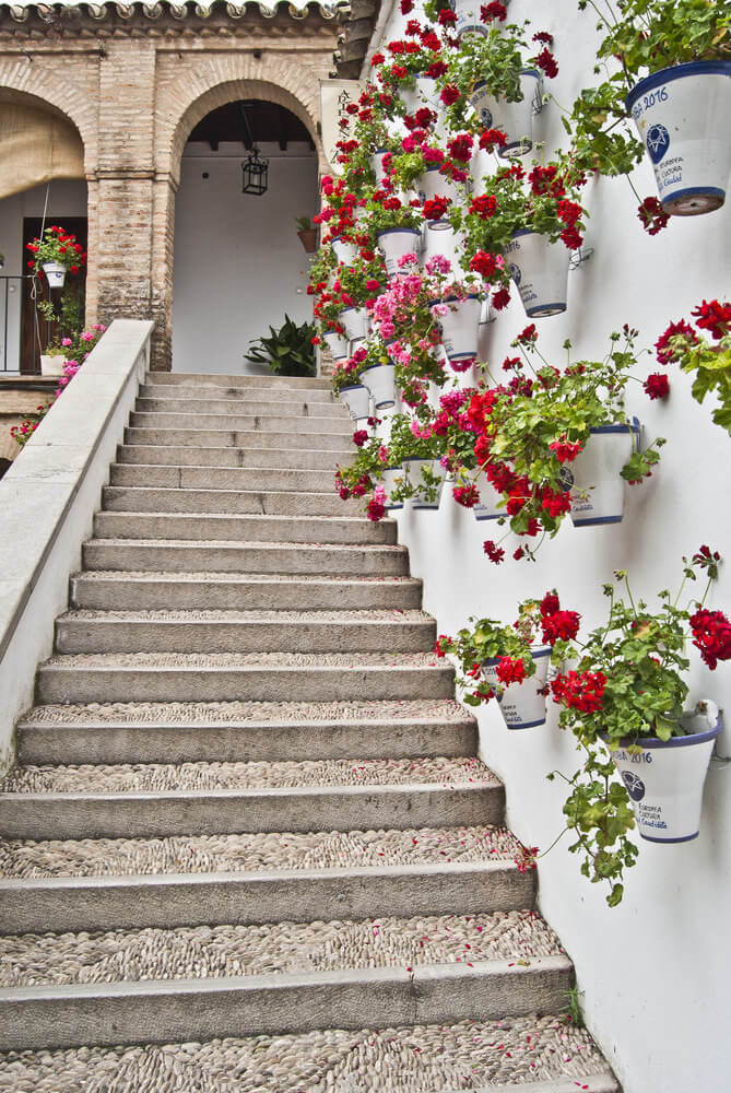 The white background of the wall gives the flowers more chance to bloom. Since the steps are a bit narrow, it is best to hang the plants to save space.