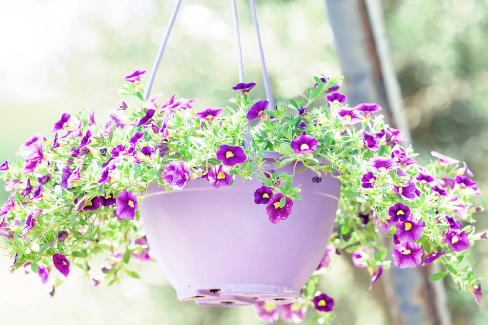 Picture of a purple flower held in a matching light purple pot.