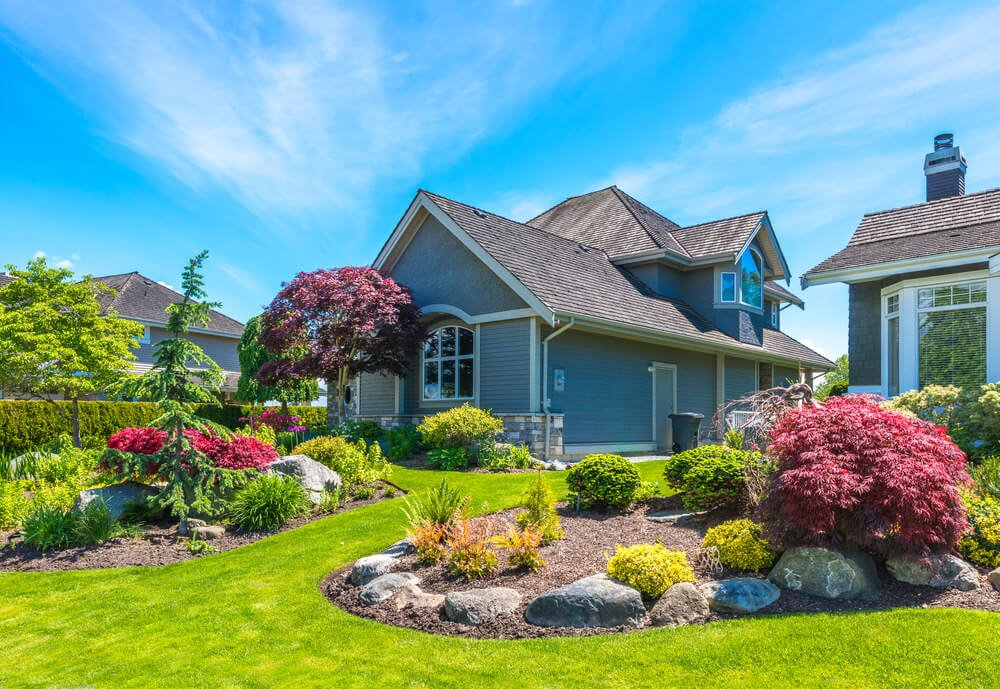 A few purple colored nandinas and a maple tree is enough to highlight the greenery view of this front yard.