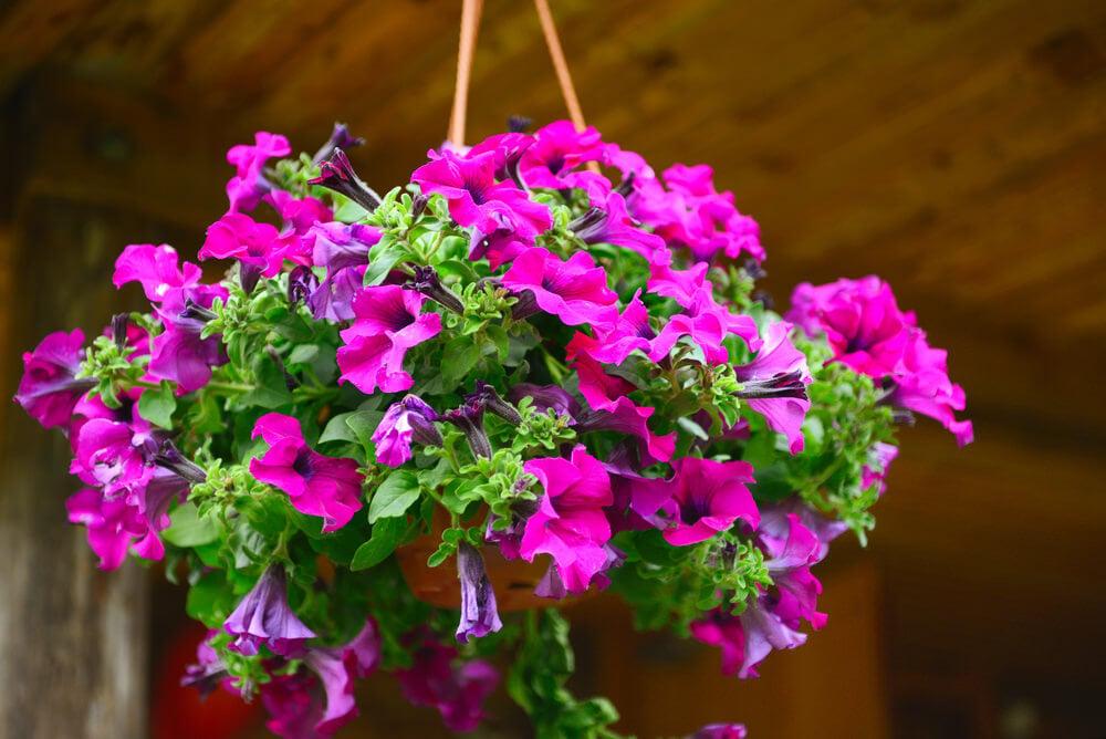 48hanging-basket-flowers