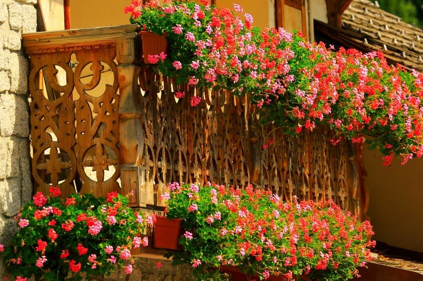 Balcony flower boxes and a profusion of pink and red along the entire width of the balcony including railing and the balcony base.