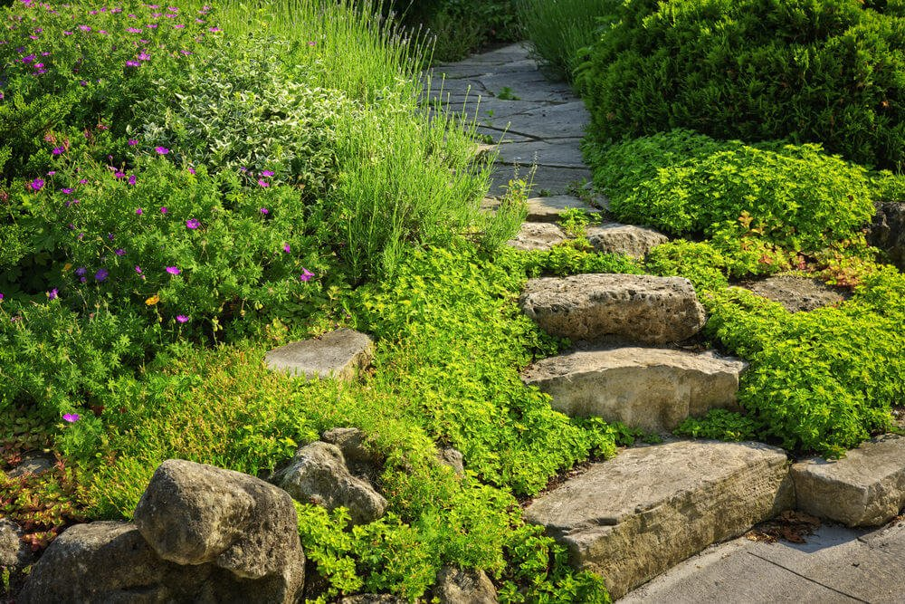Low lying shrubs make a beeline for these slab stone rock garden steps.