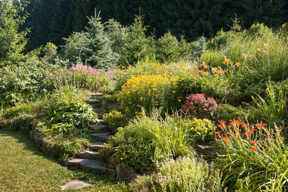 Slabs of stone garden steps snake its way through this garden of flowered shrubs and pines.