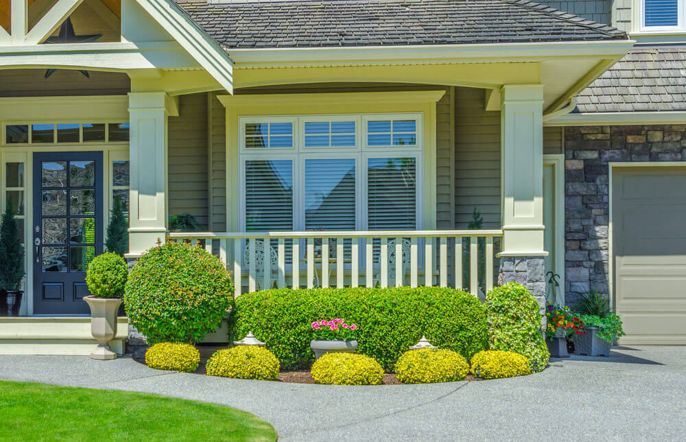 The bright yellow color of the golden rosary shrubs look even more stunning in bright sunlight. Moreover, the potted pink pansies and trimmed shrubs make the view more pleasant.
