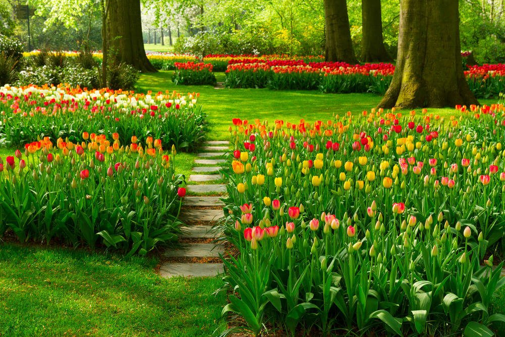This garden of tulips is so spectacular to behold it'll take a minute or two before you notice the stone garden steps at the center. The beautiful tulips are kept well-lined, making them a harmonious sight in between the gigantic garden trees.