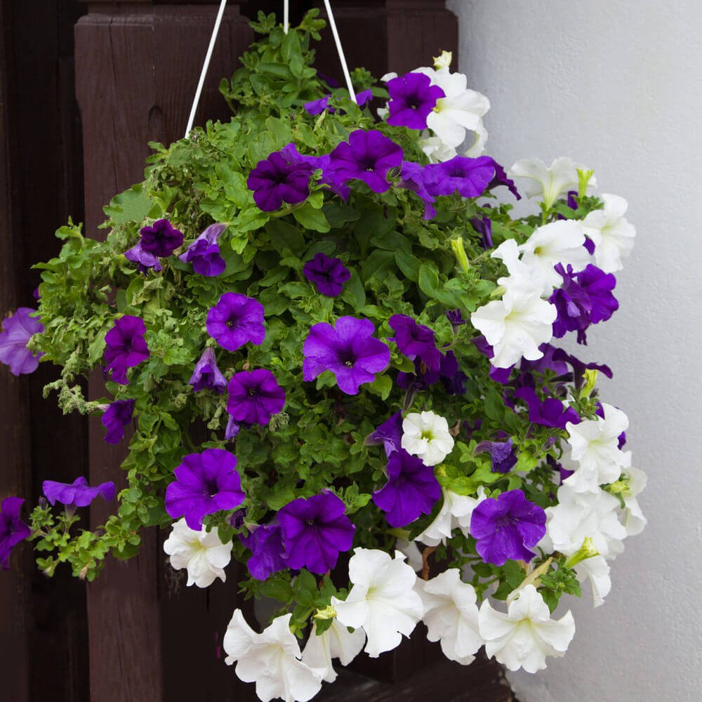 Photo of a purple and white flower arrangement and a hanging basket.