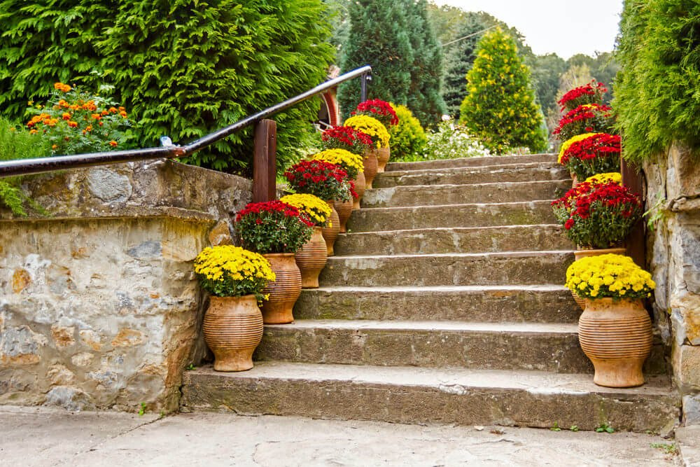 Aligned along the corners of each step, the full blossom chrysanthemums in large clay pots seem to lead the way towards paradise.