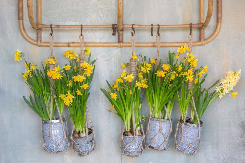 Example of a series of small ceramic pots used as planters for hanging daffodils. Take note of the rope used to hold these small flowerpots.