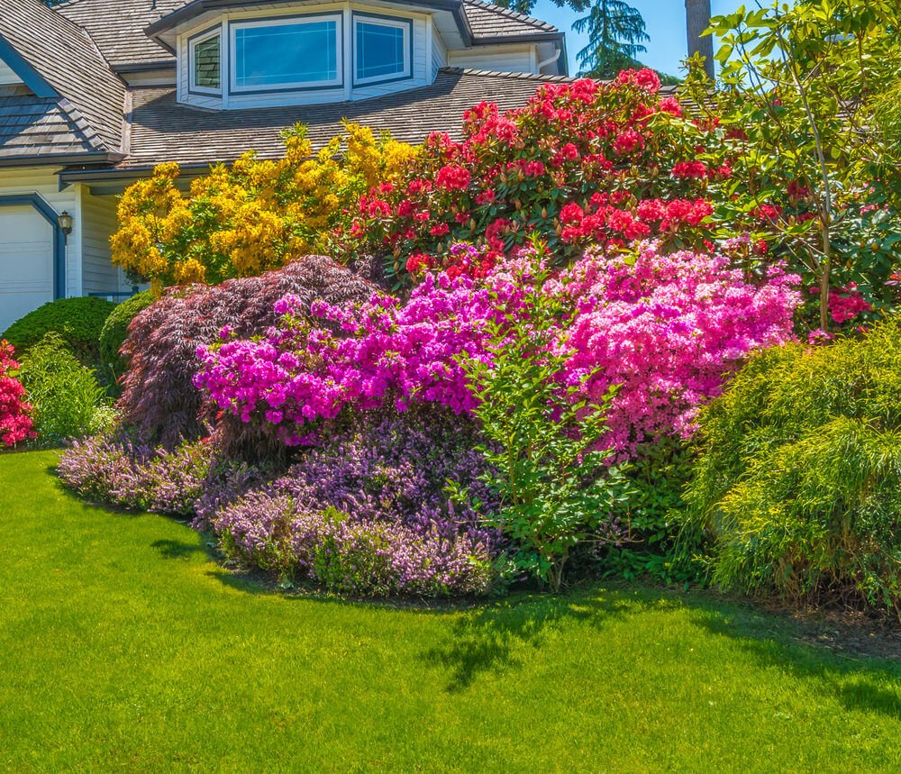 Colorful blossoms assemble in a thick and sheer view of a glamorous front yard. Edging on the corners are well-maintained turf grasses.