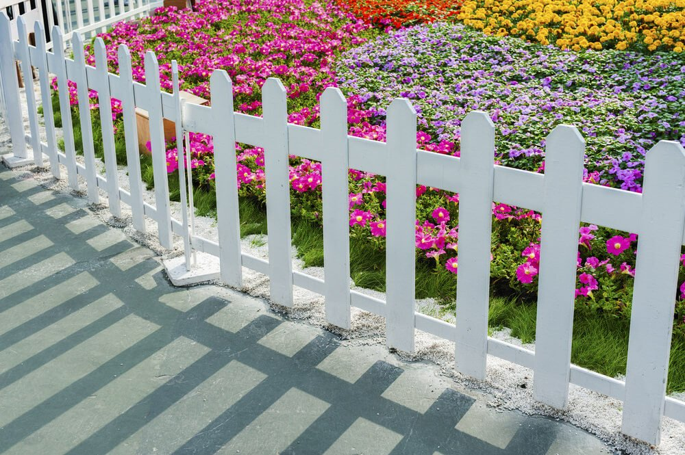A short and white wood fence encloses colorful pansies, petunias and chrysanthemums. Edging from the concrete sidewalk is fine white sand.