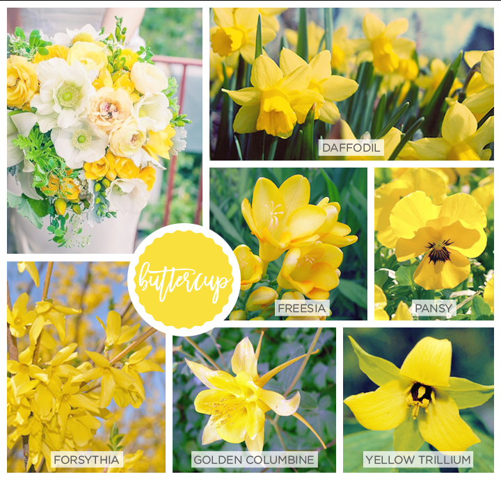 Yellow Spring flowers: forsythia, golden columbine, yellow trillium, freesia, pansy and of course the daffodil.